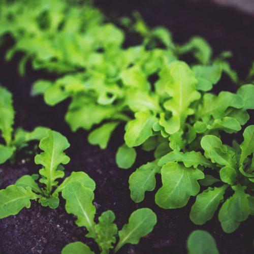 botanical-cooking-eco-5809